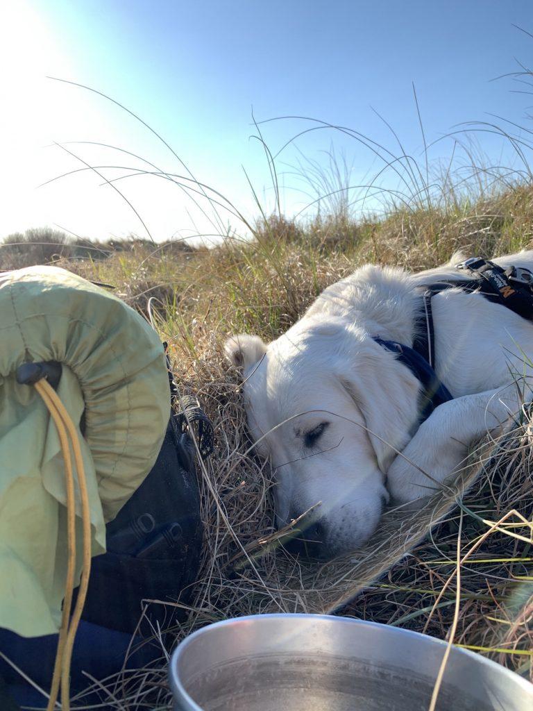 Træt hund efter en dags vandring